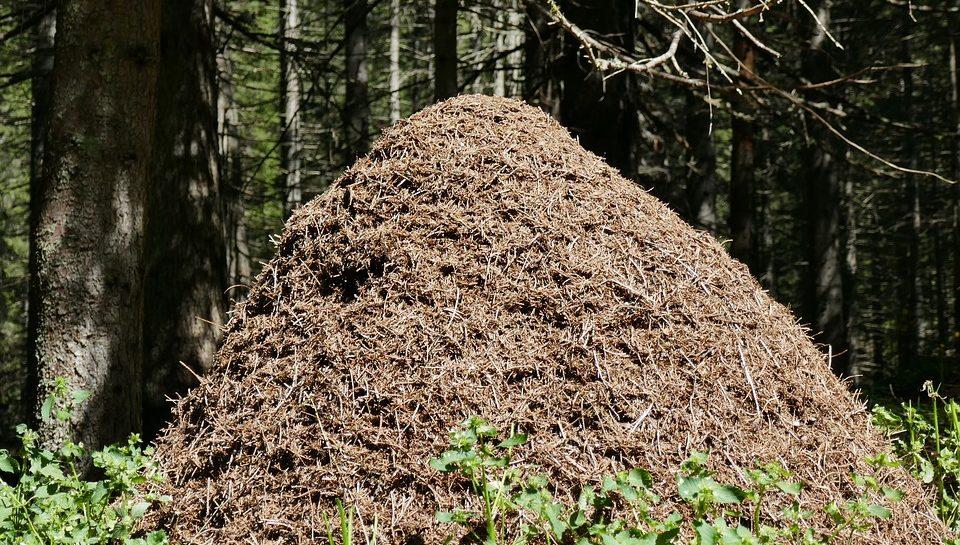 Comment détruire une fourmiliere